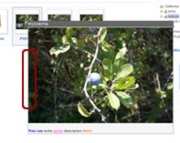 Phoca Gallery Parameters - Overlib Border Color