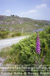 Irland | Munster | Ring of Beara |
